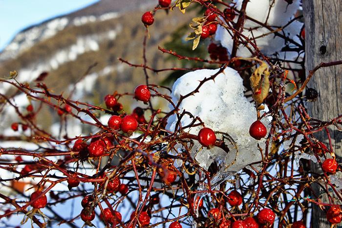 Moda Inverno Neve